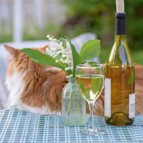 Prue Leng Cat Wine Gardening